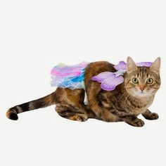 Catsparella: PetSmart Halloween Costume And Cat Toy Review & Giveaway!