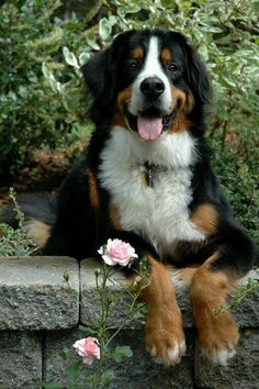 Very nice dog