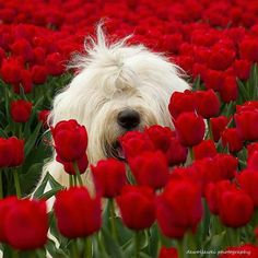 Red flowers with a white cute dog in the middle!!!<3