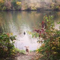 Addie at the lake