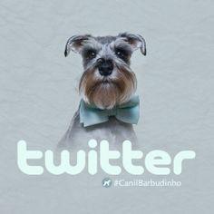 Canil Barbudinhos - Schnauzer Miniatura no Twitter