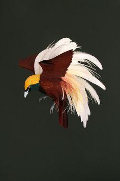 Greater Bird of Paradise - Paper Bird Art by 3D paper artist Diana Beltran Herrera.2013