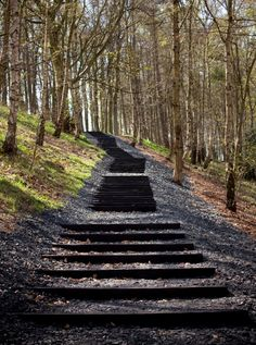 Black Steps.David Nash