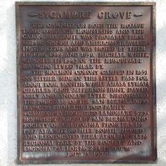 #573: Sycamore Grove, Glen Helen Regional Park