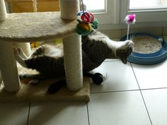 Cat's Morning Stretches–Caption This Cute Photo!