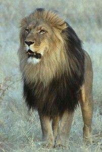 wonderful king <3