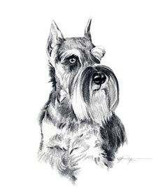 tattoos dog black white line art tattoo sample collie dog tattoo . Outline Drawings, Animal Drawings, Art Drawings, Drawing Art, Drawing Animals, Drawing Ideas, Dog Pencil Drawing, Pencil Drawings, 2 Pencil