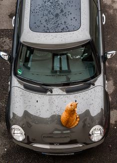 Farmis R53S Park Lane - dezent, praktisch, gut :o) - MINI² - Die ComMINIty - Das große deutschsprachige Forum für alle New MINI One Diesel Cooper S Cabrio John Cooper Works Tuning BMW mini JCW R50 R52 R53 R55 R56 R57