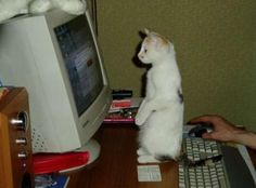 """""""Laita niitä alastomia kissoja..."""""""