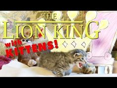 The Lion King - with Kittens