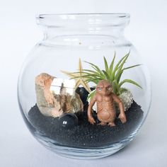 Series: Extra Terrestrial Terrarium Kit by TerrariumKits Terrarium Kits, Air Plant Terrarium, Sea Urchin Shell, Extra Terrestrial, Glass Vessel, Air Plants, Succulents, Bulb, Shapes