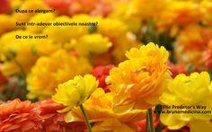 Yellow flowers in the big garden - beautiful perfume Beautiful Flowers Hd Wallpapers, Beautiful Flowers Pictures, Beautiful Nature Wallpaper, Amazing Flowers, Yellow Flower Wallpaper, Best Flower Wallpaper, Wallpaper Nature Flowers, Hd Flowers, Yellow Flowers