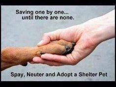 Adopt, Foster, Transport, Advocate, Educate, Spay, and Neuter. Report animal cruelty, neglect, and abuse. Support the rescues, shelters, organizations, and volunteers that help animals.