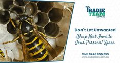 Wasps Pest Control - Call Australia's wasps pest control expert, if you are looking for emergency wasps control & nest removal. Wasp Nest Removal, Wasp Stings, Pest Control Services, Melbourne, Rid, Garage, Carport Garage, Garages, Carriage House