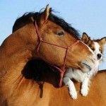 youtube funny animals horses
