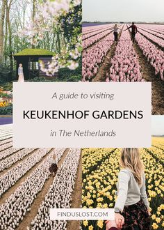 A guide to visiting Keukenhof gardens in the netherlands find us lost
