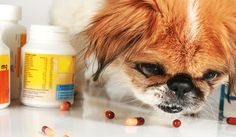 Treating your dog naturally from parasites
