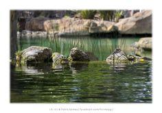 Bioparc [2013 - Valencia - Espanha / España / Spain ] #fotografia #fotografias #photography #foto #fotos #photo #photos #local #locais #locals #paisagem #paisaje #landscape #paisagens #paisajes #landscapes #europa #europe #natureza #naturaleza #nature #lago #lake