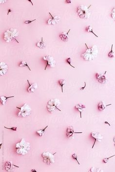 Image about pink in Muster🎀 by Yours truly on We Heart It