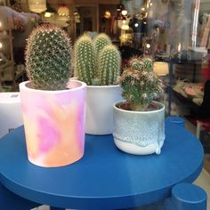 « through the shop window 🌵🌵🌵 Vevey, Showroom, Cactus, Planter Pots, Windows, Holidays, Instagram Posts, Plants, Shopping