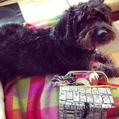 Sausage the Juggz schnoodle dog Schnoodle Dog, Jumper Designs, Bespoke Design, Hand Sewing, Sausage, Knitting, Pets, Animals, Custom Design