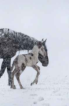 Horses. A winter scene - first snow.