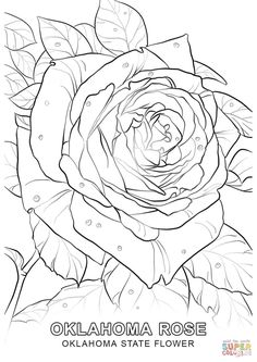 oklahoma state flower coloring page free printable coloring pages