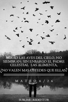"""""""MATEO 6:26″"""