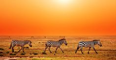 How exciting the Tanzania Safari Tours will be for friends and family?