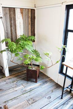 Giant Indoor Houseplant