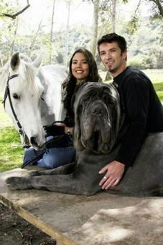 Hercules (the dog!) weighs 282 pounds, wow!