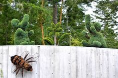 Topiary at The Butchart Gardens Seeds Online, Japanese Maple, Salvia, Vancouver Island, Begonia, Topiary, Cactus Plants, Hydrangea, Tourism