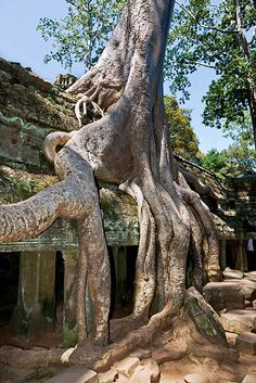 Ta Phrom, Cambodia.  One seriously aggressive tree.  Eats temples for lunch.