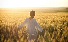 Woman walk in cornfield Wallpapers Pictures Photos Images