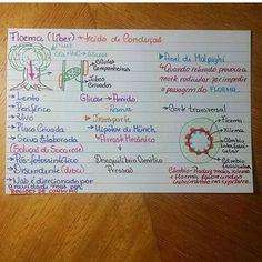 Biologia - xilema e floema part 2
