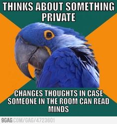 Paranoid Parrot's Thoughts... Is it bad that I do this?