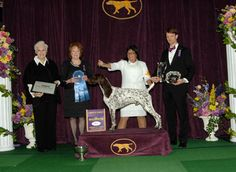 The winners of the Sporting, Working, and Terrier groups were awarded on the second night of the 2016 Westminster Kennel Club Dog Show presented by Purina® Pro Plan® on Feb. 16.
