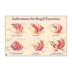 Good diagrams of prolapse sites and pelvic floor anatomy