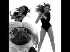 Doug the Pug Music Video Compilation - YouTube