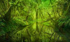 FLORESTA MÁGICA  Floresta,Olímpico, Washington, EUA