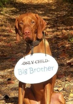 Dog to be big brother
