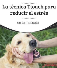 La técnica Ttouch para reducir el estrés en tu mascota   La técnica del Ttouch es excelente para calmar y adiestrar a las mascotas. Aquí te mostramos todas las posiblidades y beneficios. #estrés #técnica #salud #adiestrar