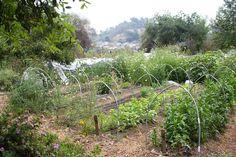Our farm.