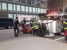 Working to ban horse-drawn carriages