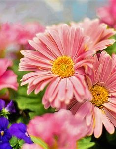 https://pixabay.com/en/spring-flowers-pink-garden-blossom-745721/