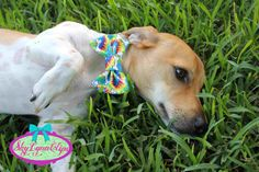 Custom Sized Velcro Strap Doggy Bow Tie by SkyLynnClips on Etsy, $12.00