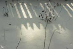 Winter story of light from beyond the fence Androgyny, Fence, The Originals, Winter, Home Decor, Winter Time, Decoration Home, Room Decor, Interior Decorating