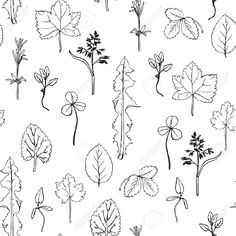 Seamless Pattern With Hand Drawing Herbs And Leaves, Hand Drawn.. Royalty Free Cliparts, Vectors, And Stock Illustration. Image 40216147.