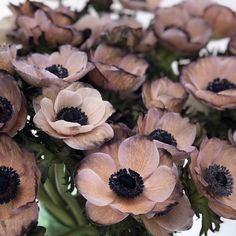 Anemone Brownies, dyed by viproses so beautiful this taupe, sepia color. Flowers Nature, Spring Flowers, Natural Stone Pavers, Sepia Color, Parrot Tulips, Black Garden, Woodland Garden, In Season Produce, Wedding Advice