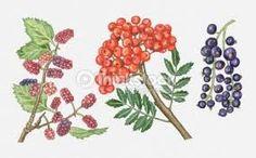 열매일러스트 - Google 검색